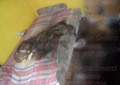 Sprzątanie mieszkań po zgonie zmarłym rozkładzie zwłok Bełchatów